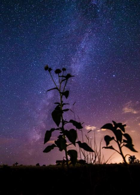Milky_Way_Flowers.jpg